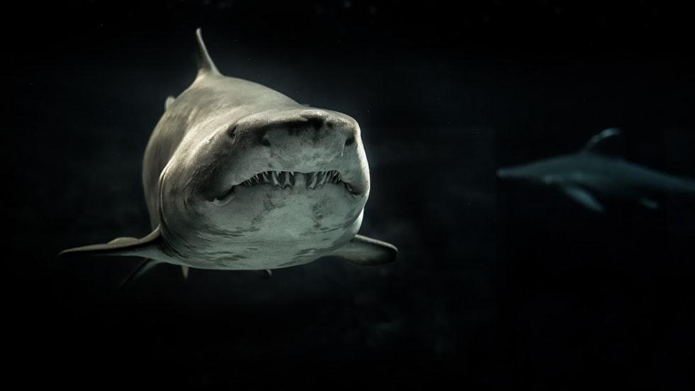 Foto: av George Desipris/Pexels – på två  hajar i mörka vatten.