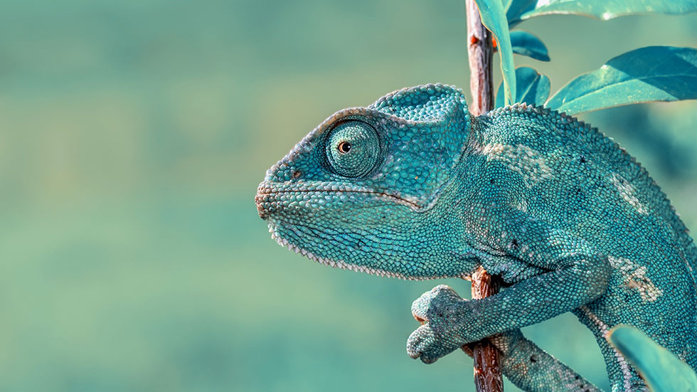 Native annonsering - En kameleont som sticker ut